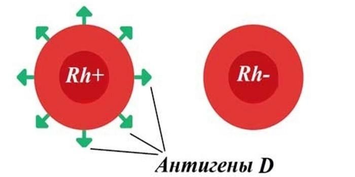 Антигены D