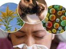 Аллергический синусит острый и хронический — причины, диагностика и как лечить