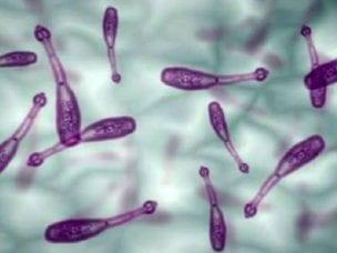 Эхинококк у человека - симптомы, диагностика и лечение