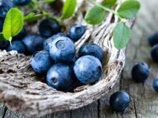 Голубика — полезные свойства и противопоказания, лечебные рецепты отваров, настоек, морса и сока из ягоды