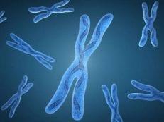 Хромосомные мутации — классификация и структура аберраций, перестройка межхромосомных связей