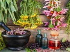 Мочегонные травы и сборы — полезные свойства, использование для лечения и при похудении