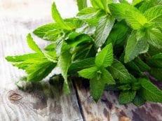 Мята — лечебные свойства и противопоказания, рецепты приготовления настоев, отваров и чая