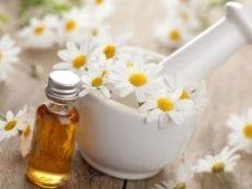 Ромашка: лечебные свойства и противопоказания отваров, настоек, масла для женщин, мужчин или детей