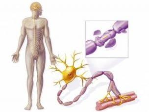 Симптомы бокового амиотрофического склероза на ранней стадии