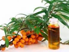 Применение и польза масла облепихи для лечения