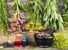 Травы для печени — самые эффективные сборы