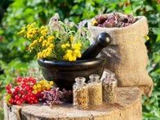 Травы от кашля и сборы разжижающие мокроту или отхаркивающие — как правильно использовать для лечения