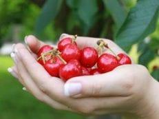 Вишня при подагре — лечебный продукт для организма при обострении заболевания