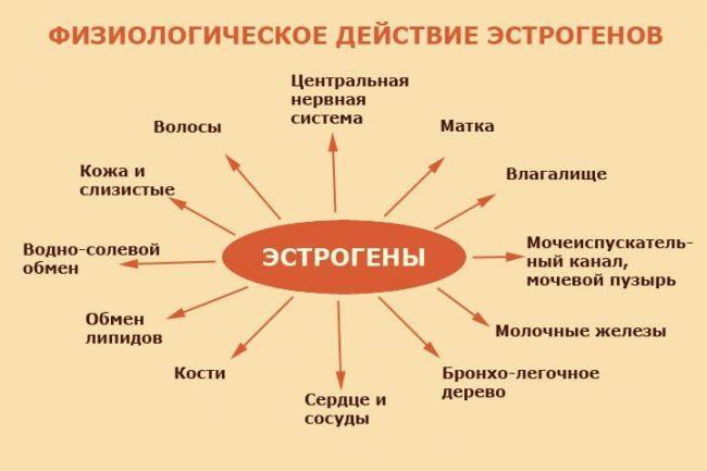 Физиологическое действие эстрагенов